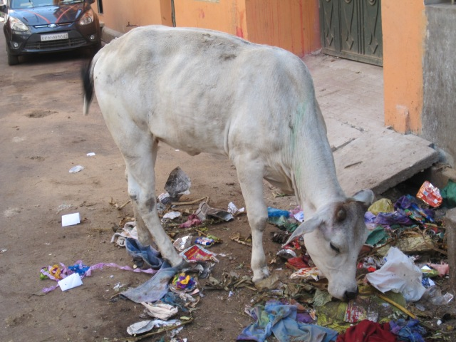 Local trash collector