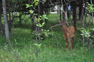 Elk!!