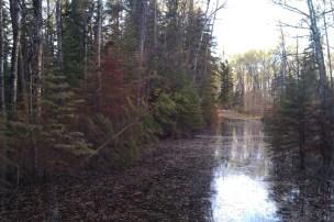 Red Deer biking trail in May