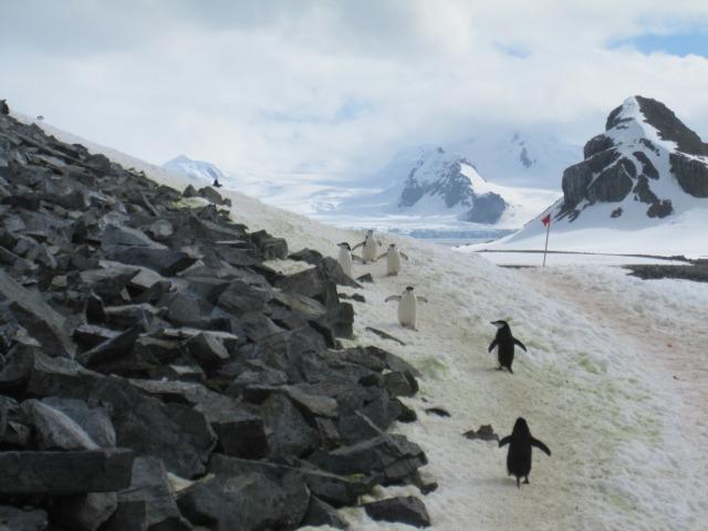 Pinguino Highway
