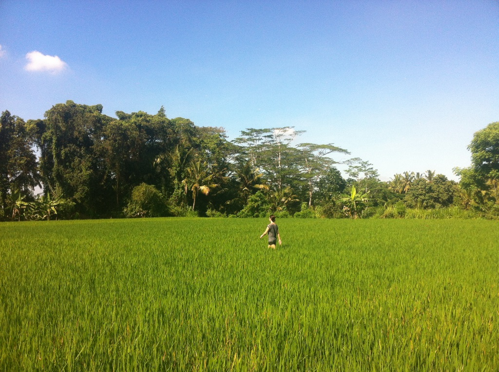 Rice maze