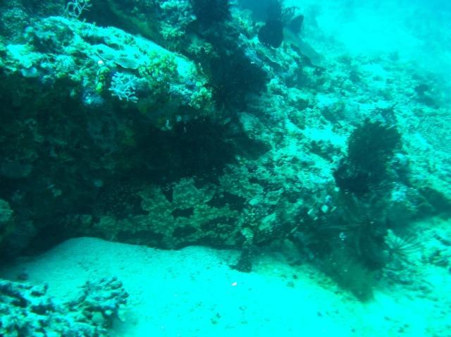Camo Grouper