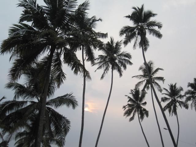 Swaying palms