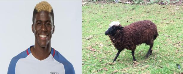 Gyasi Zardes vs A Sheep